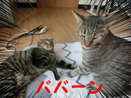 2016-11_10_07.jpg