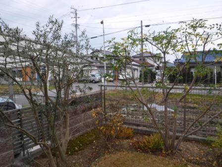 1庭の剪定4
