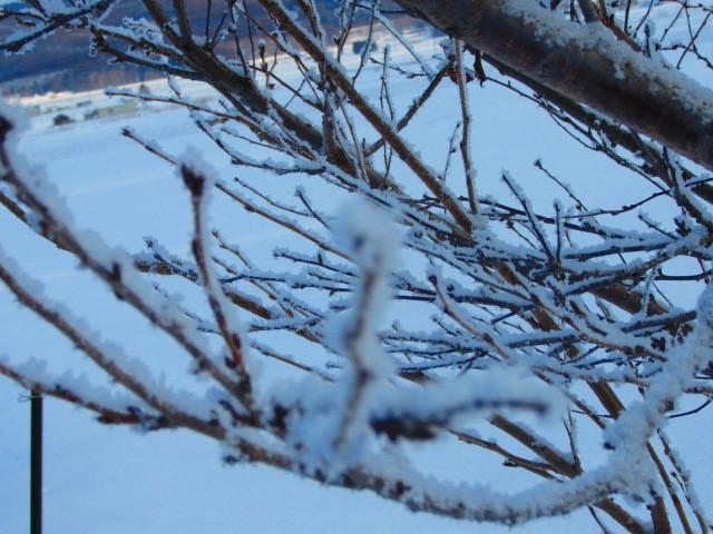 寒い朝 002