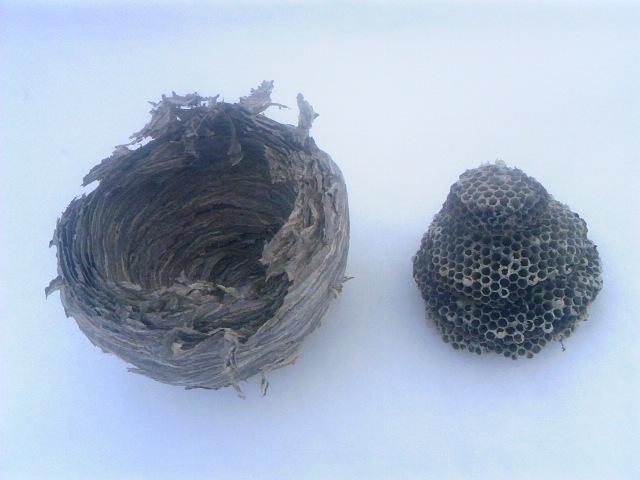 蜂の巣 003