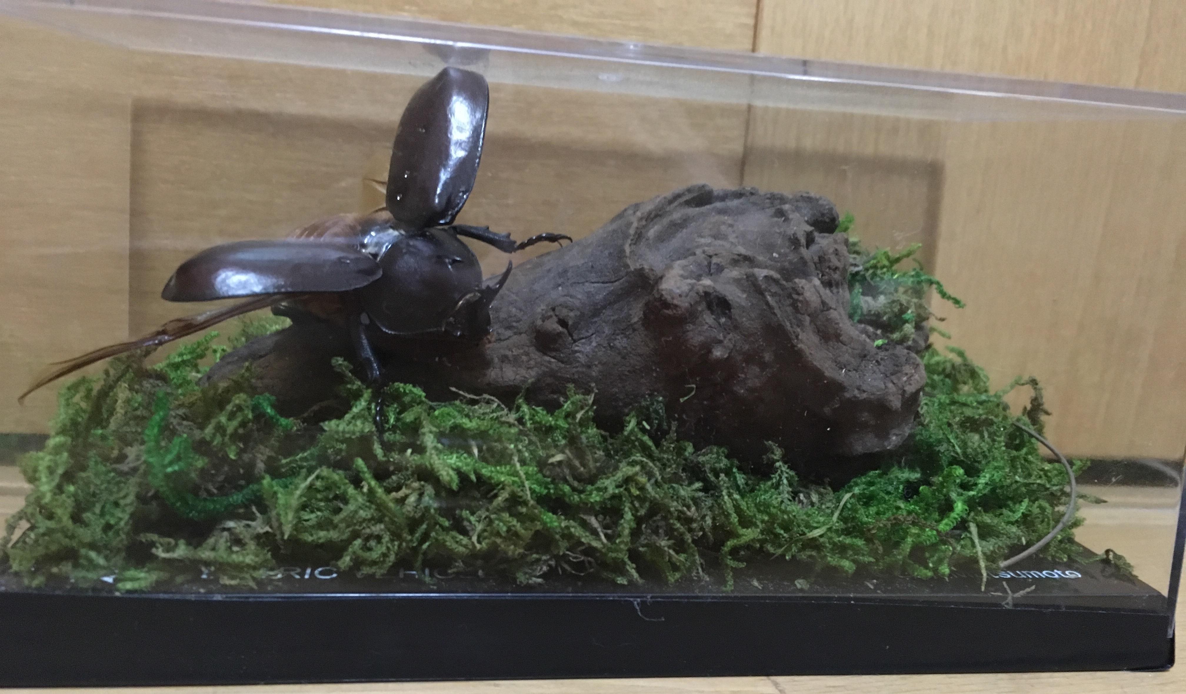 カブトムシジオラマ標本