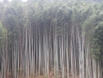 和木町の藪20170102
