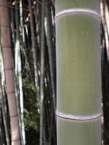 500「竹に上下の節有り」
