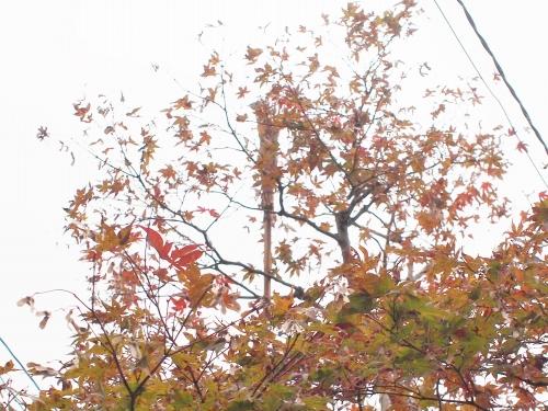 500蜘蛛の巣と紅葉2
