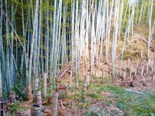 500竹を切ったら宝が出た161221