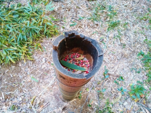 500竹を切ったら宝が出た1612212
