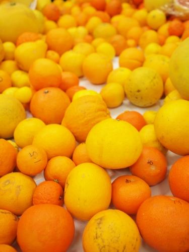 500みかんと柑橘類と三車火宅01