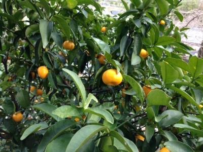 橘本神社3