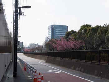 大横川20170129_3