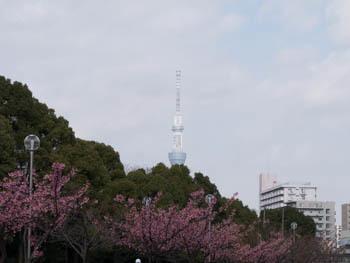 大横川20170129_1