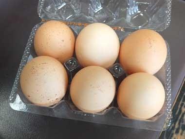 9産みたて卵1129