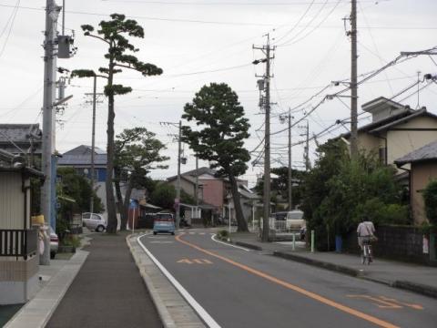 上青島の名残松