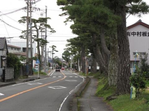 上青島の松並木