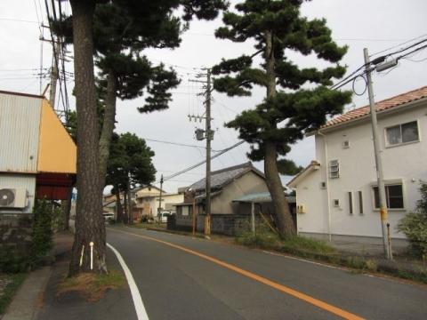 下青島の松並木
