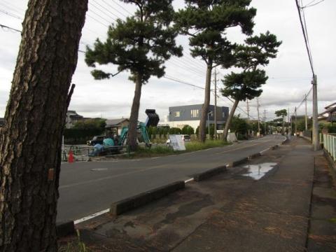 瀬戸新屋の松並木