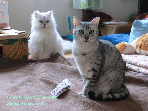 yutaka&rayleigh 34