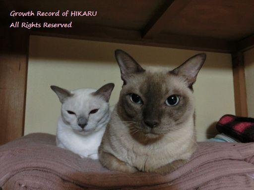 hikaru&miu 359
