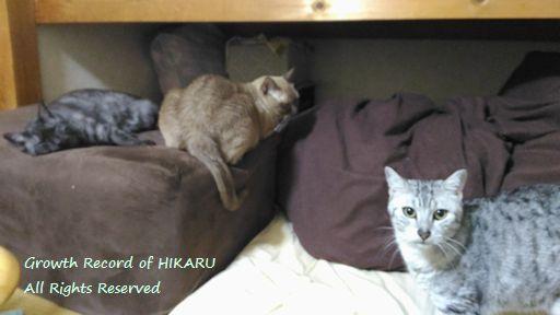 hikaru&rayleigh&vivace 1