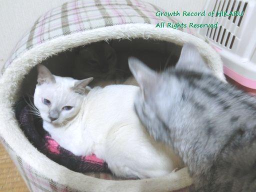 hikaru&miu&rayleigh 34