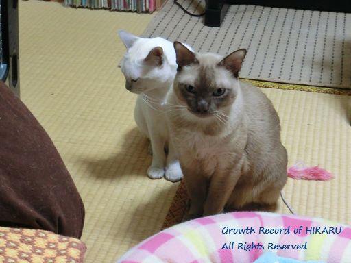 hikaru&miu 361