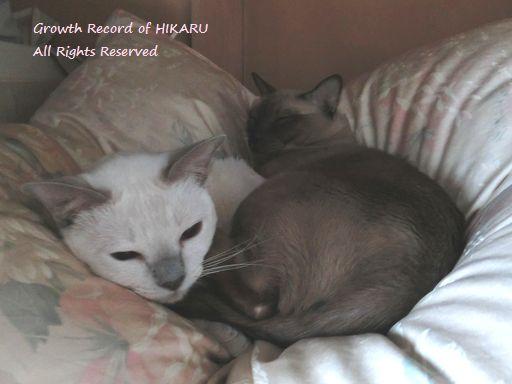hikaru&miu 362