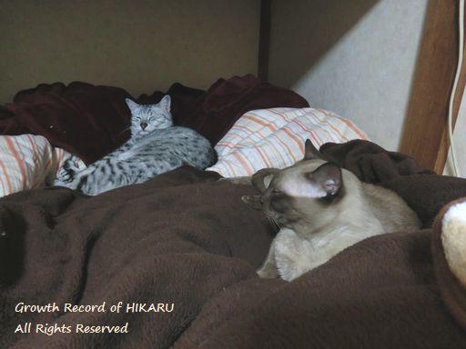 hikaru&rayleigh 55
