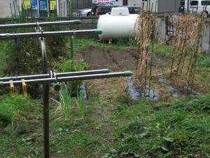 161031雨の畑