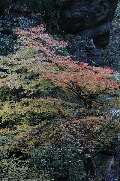 仙波渓谷紅葉 161112 05