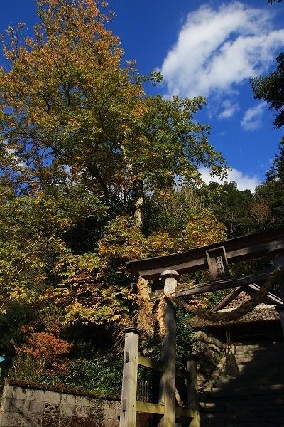 滑川惣河内神社紅葉 161126 01