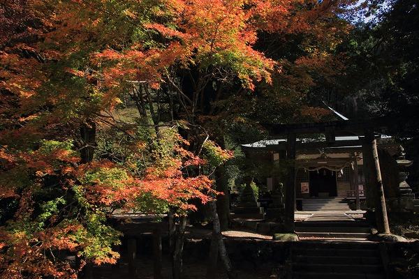 土谷三島神社紅葉 161126 01