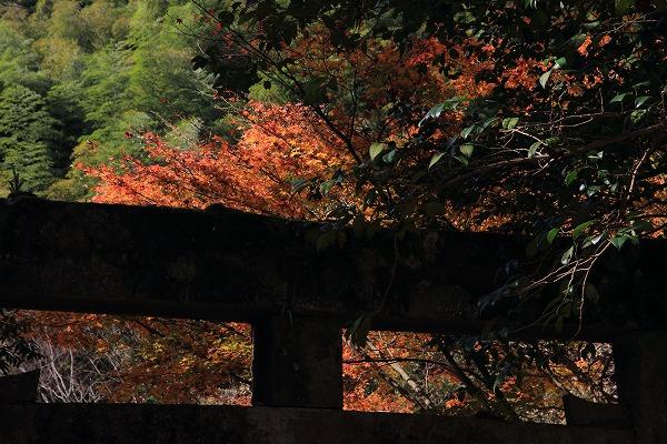 土谷三島神社紅葉 161126 02
