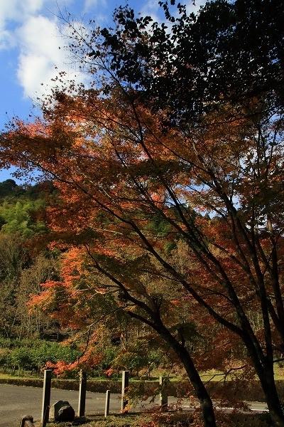 土谷三島神社紅葉 161126 03