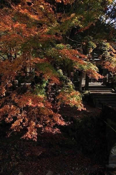 土谷三島神社紅葉 161126 04