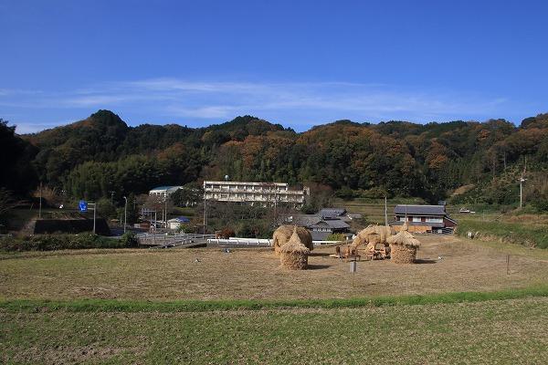 鈍川稲藁猪 161203 06