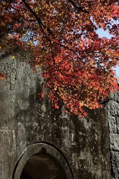 芸予要塞小島砲台跡・紅葉 161211 12
