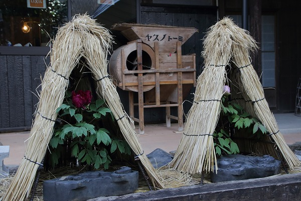 ぼたん茶屋冬牡丹祭 170107 13