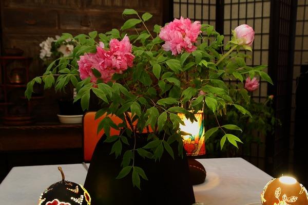 ぼたん茶屋冬牡丹祭 170107 08