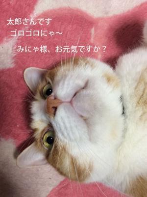 tarou_convert_20161121223248.jpg