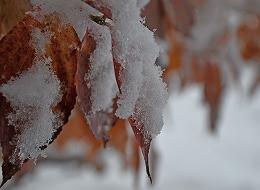 DSC_0232(214)(1)雪1