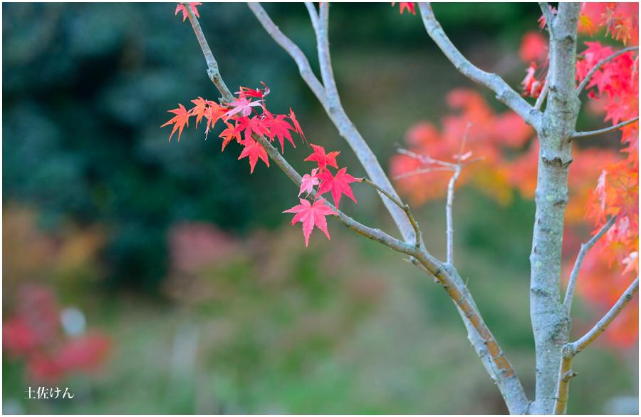 秋の大阪城2