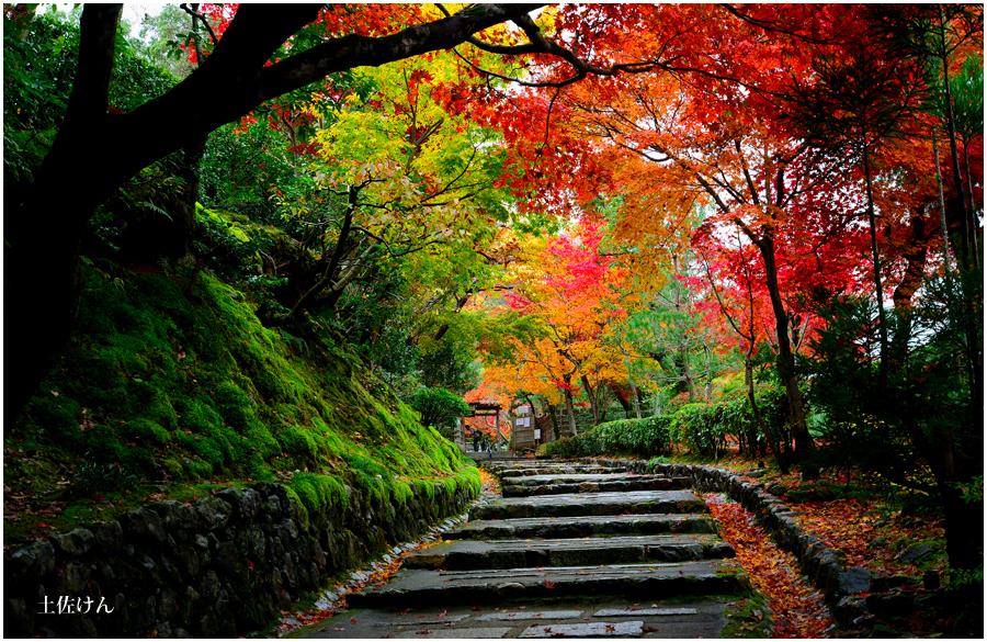 錦秋の京都4
