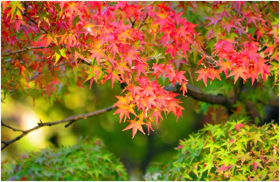 秋の大阪城・助手編4