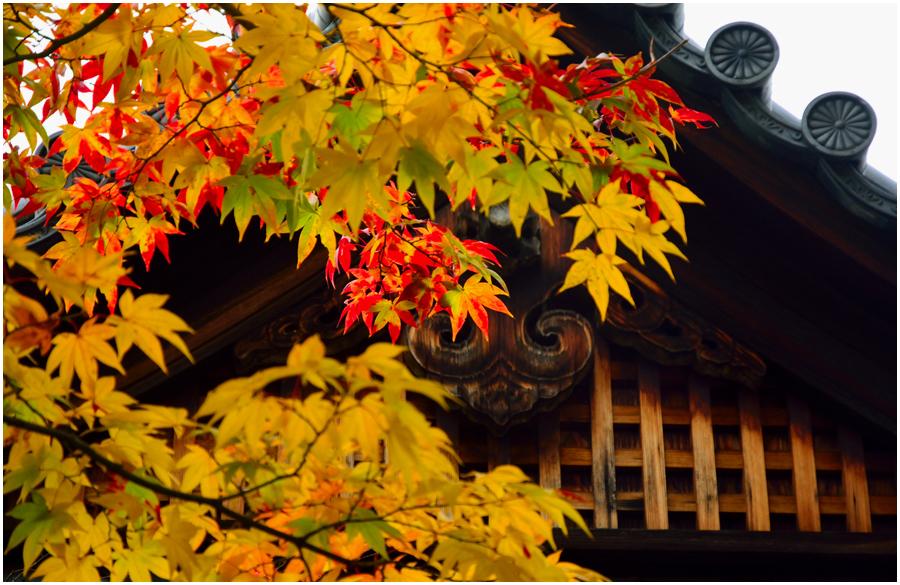 錦秋の京都・助手3