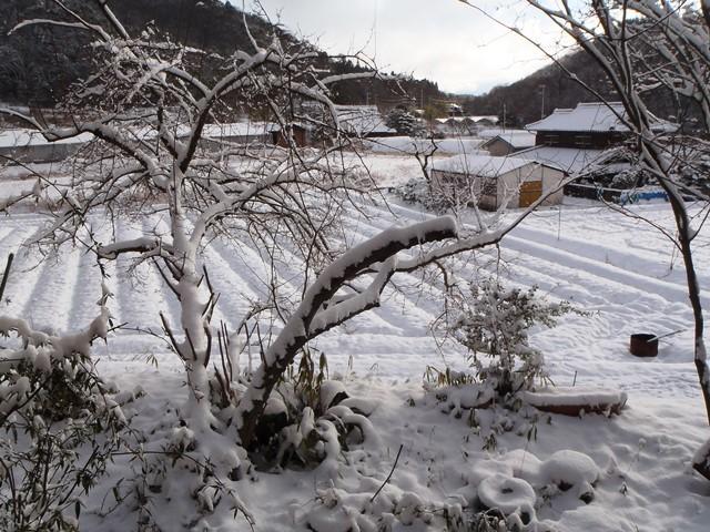 雪の朝20170115
