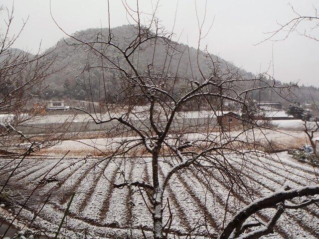 雪化粧の朝20170209