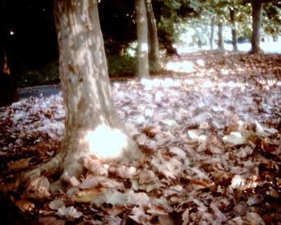 葉が散るプラタナス並木・新宿御苑:Entry