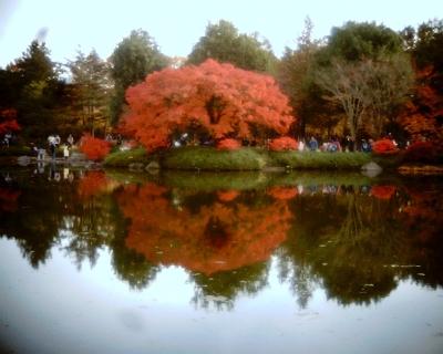 池に映る紅葉・昭和記念公園:Entry