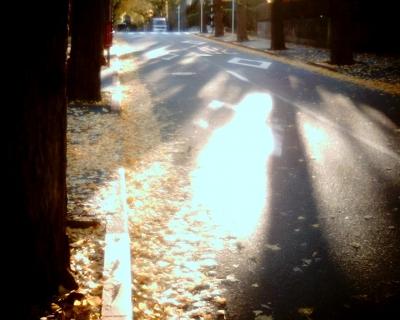 イチョウ並木の影・田園調布:Entry