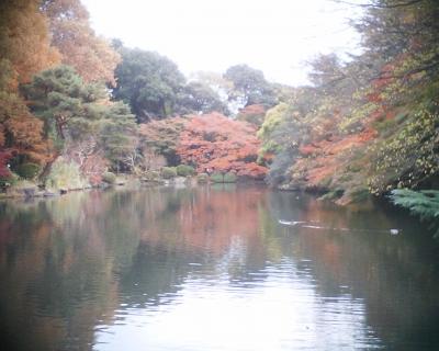 下の池の紅葉・新宿御苑:R2
