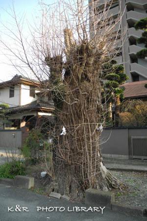 2016日3月20日健軍神社10